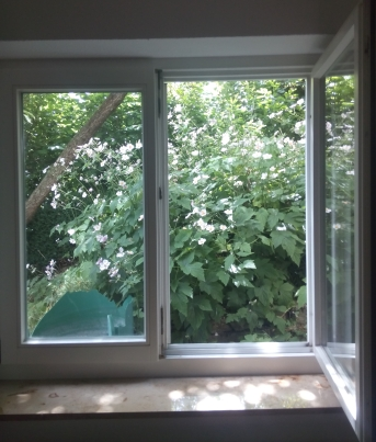 Wunderblick-Fenster